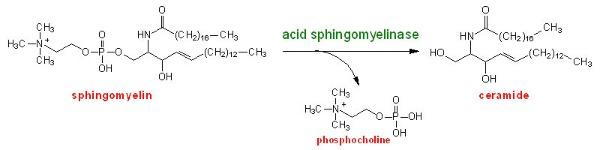 Sphingomyelinase-activity NPA NPB